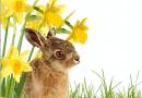 Hop along to Newbury's Giant Easter Bunny Hunt.