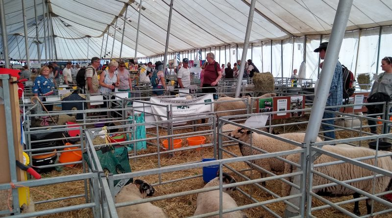 Crowds flock to Royal county of Berkshire show